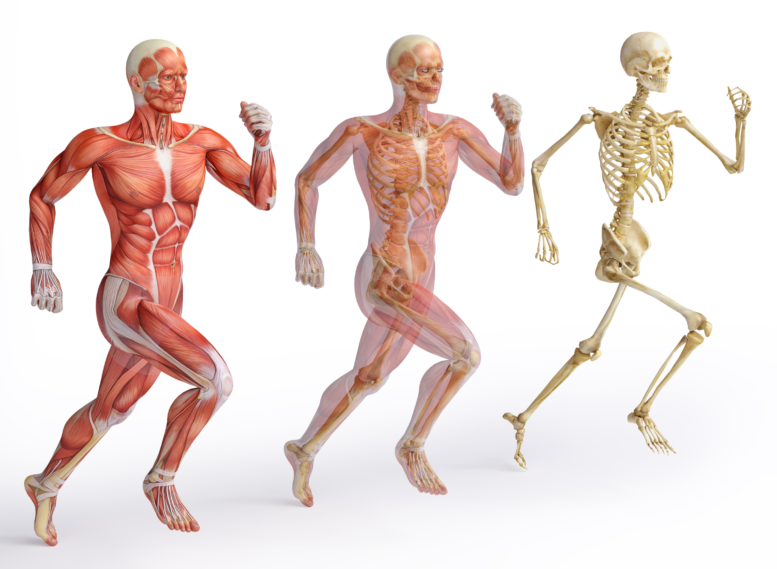 10 Amazing Facts About The Human Body Osg